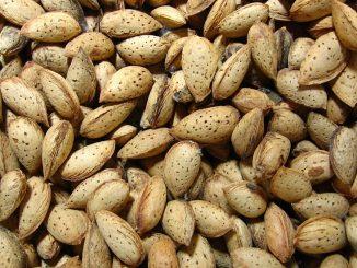 Raw Almond Milk Recipe