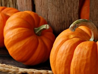 A Pumpkin Patch of Tidbits, Tips and Recipes!