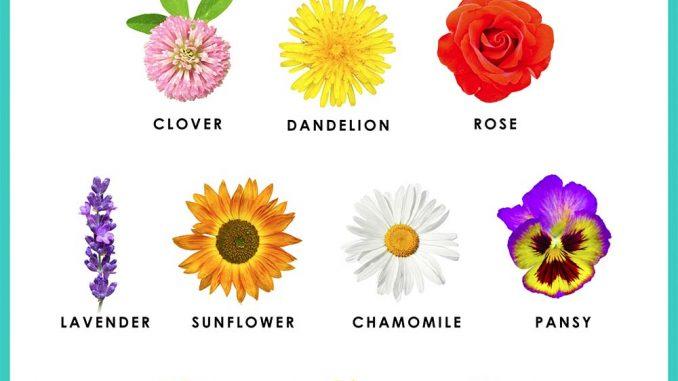 Edible Flowers | RecipesNow!