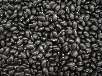 Black Bean Soup with Mango Salsa