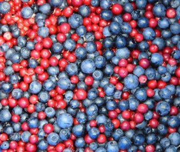Cran-Blueberry Pie
