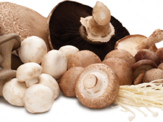 An Introduction To Fresh Canadian Mushrooms | RecipesNow!